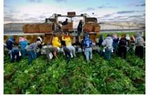 Сезонните работници трябва да отстояват правата си
